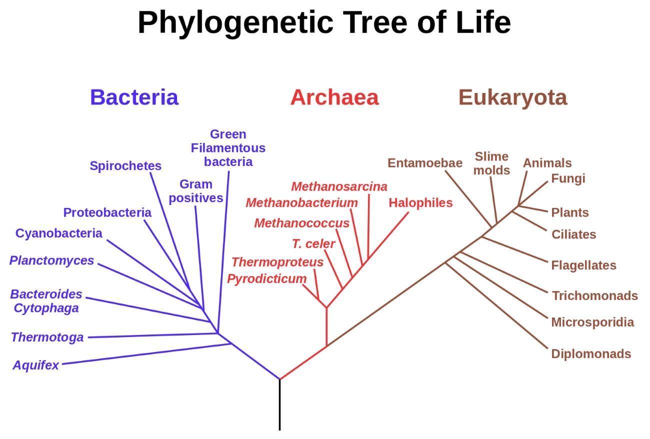 Древние микроорганизмы показали, что жизнь появилась в гидротермальной среде