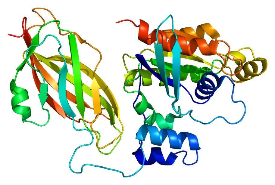 Новая генетическая болезнь меняет размер мозга