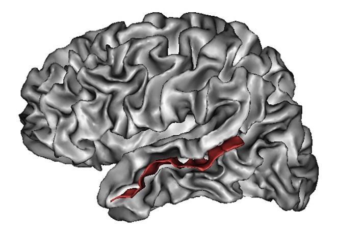 найдены суммирующие экспрессию лица и тела нейроны