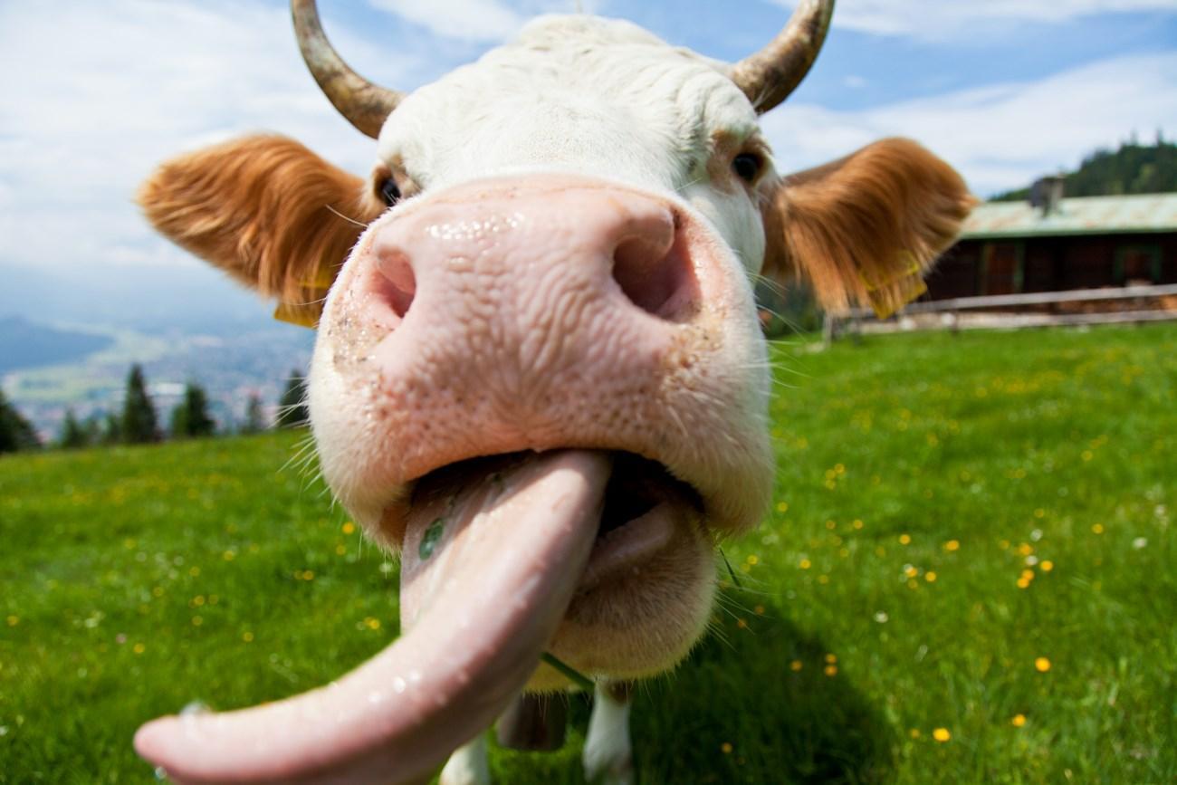 вредное влияние молока на сосуды можно снизить