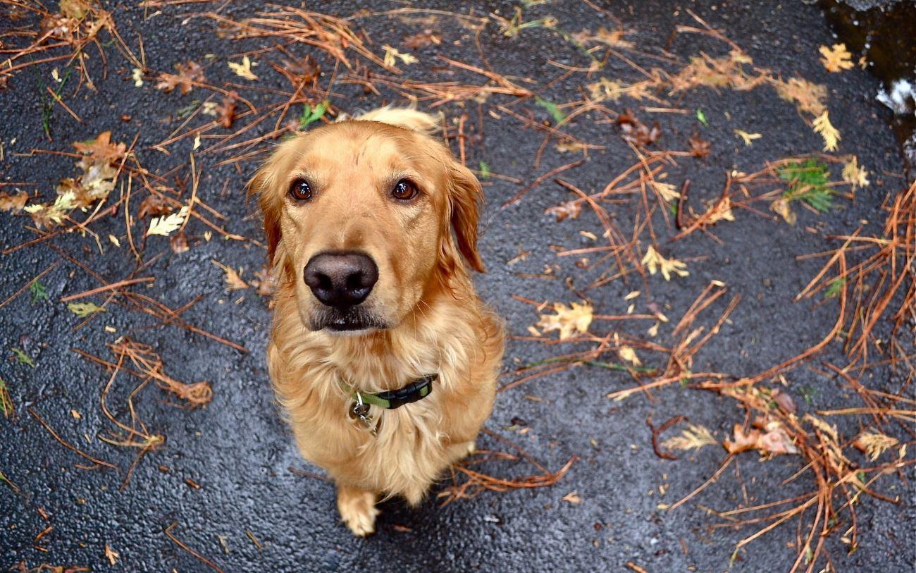 1,5 млн подписей за закон в защиту животных