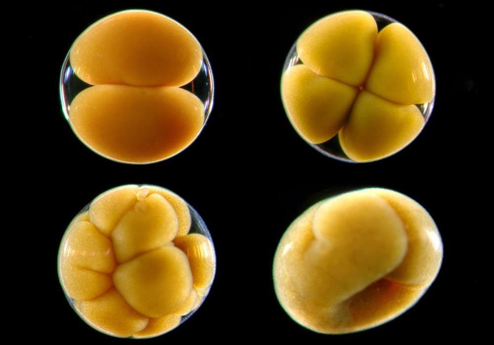 мозг диктует то, как организм должен развиваться