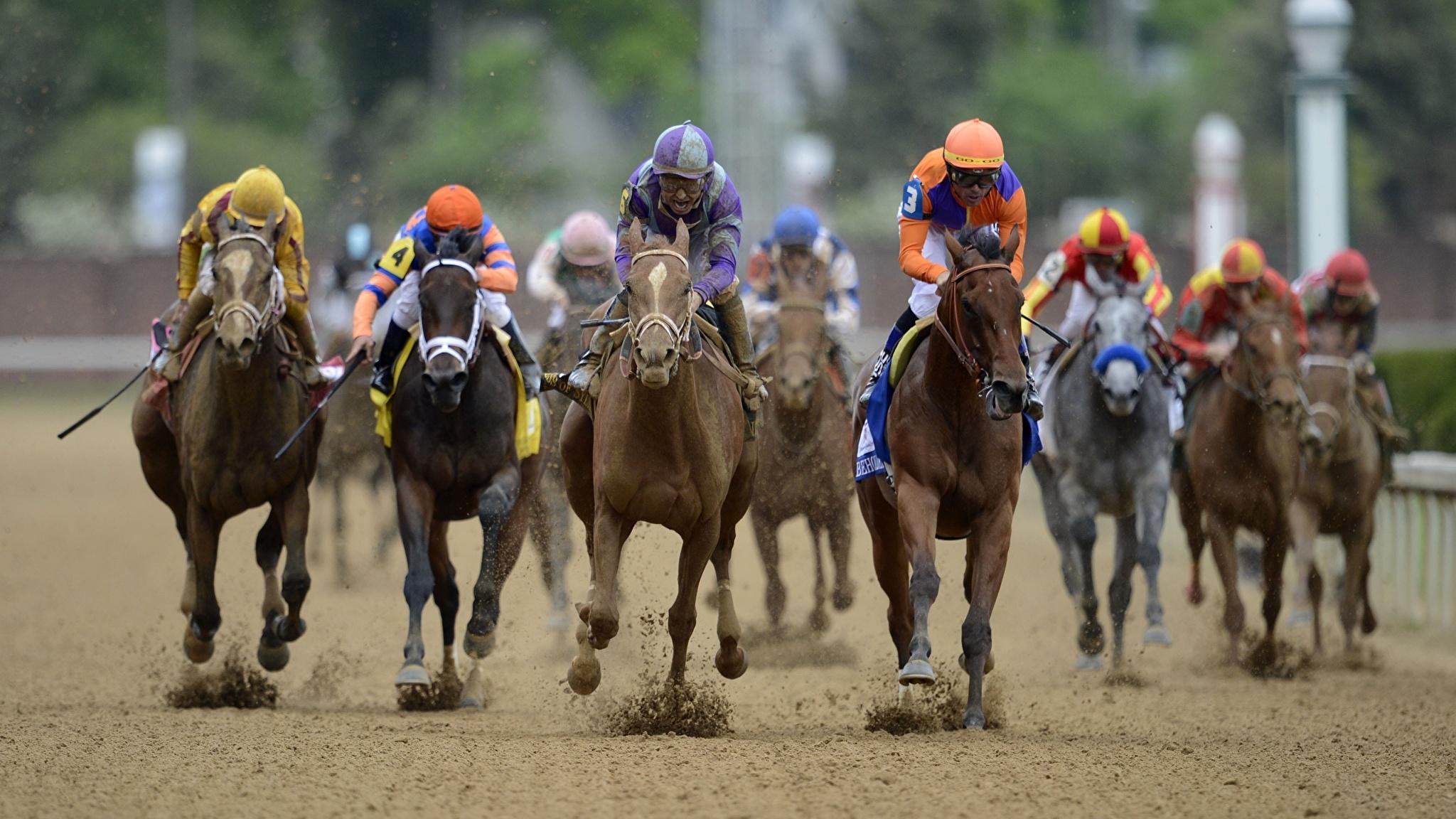 Эволюция в действии: скаковые лошади стали быстрее
