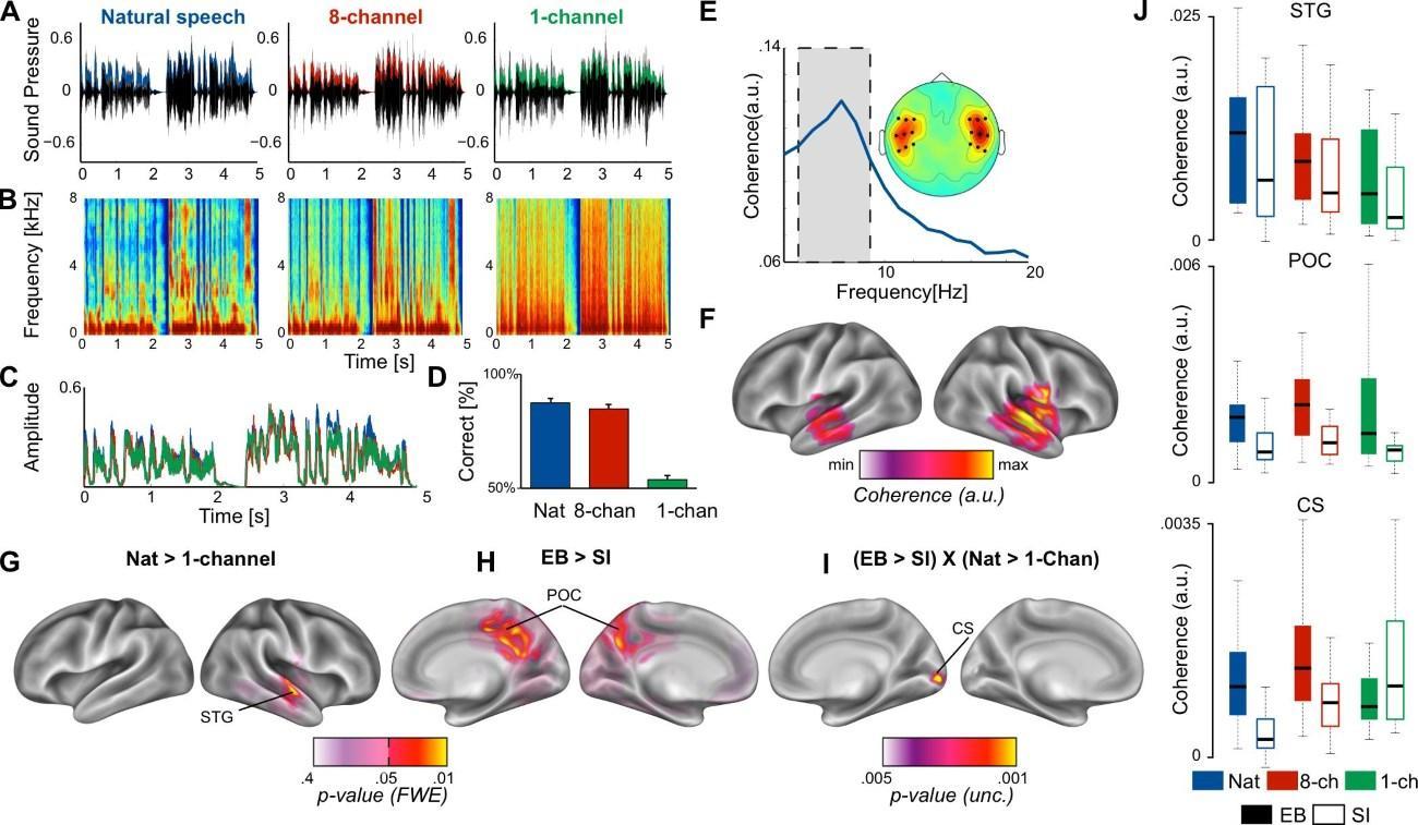 Зрительная кора головного мозга слепых людей занялась обработкой речи