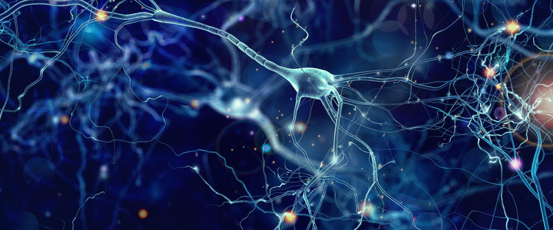 Обнаружено вещество защищающее пораженные нейроны