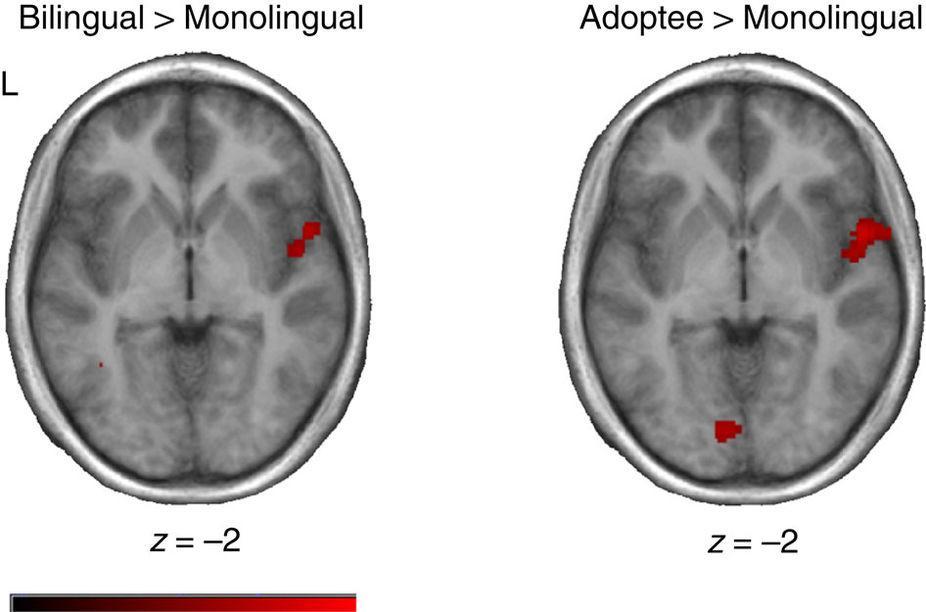 мозг детей оказался способен помнить забытый родной язык