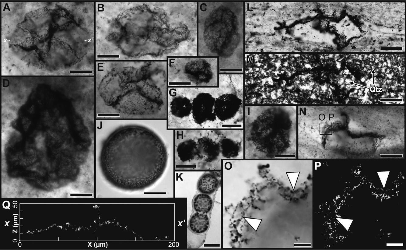 Геологи нашли жителей бескислородного периода Земли возрастом 2,5 миллиарда лет