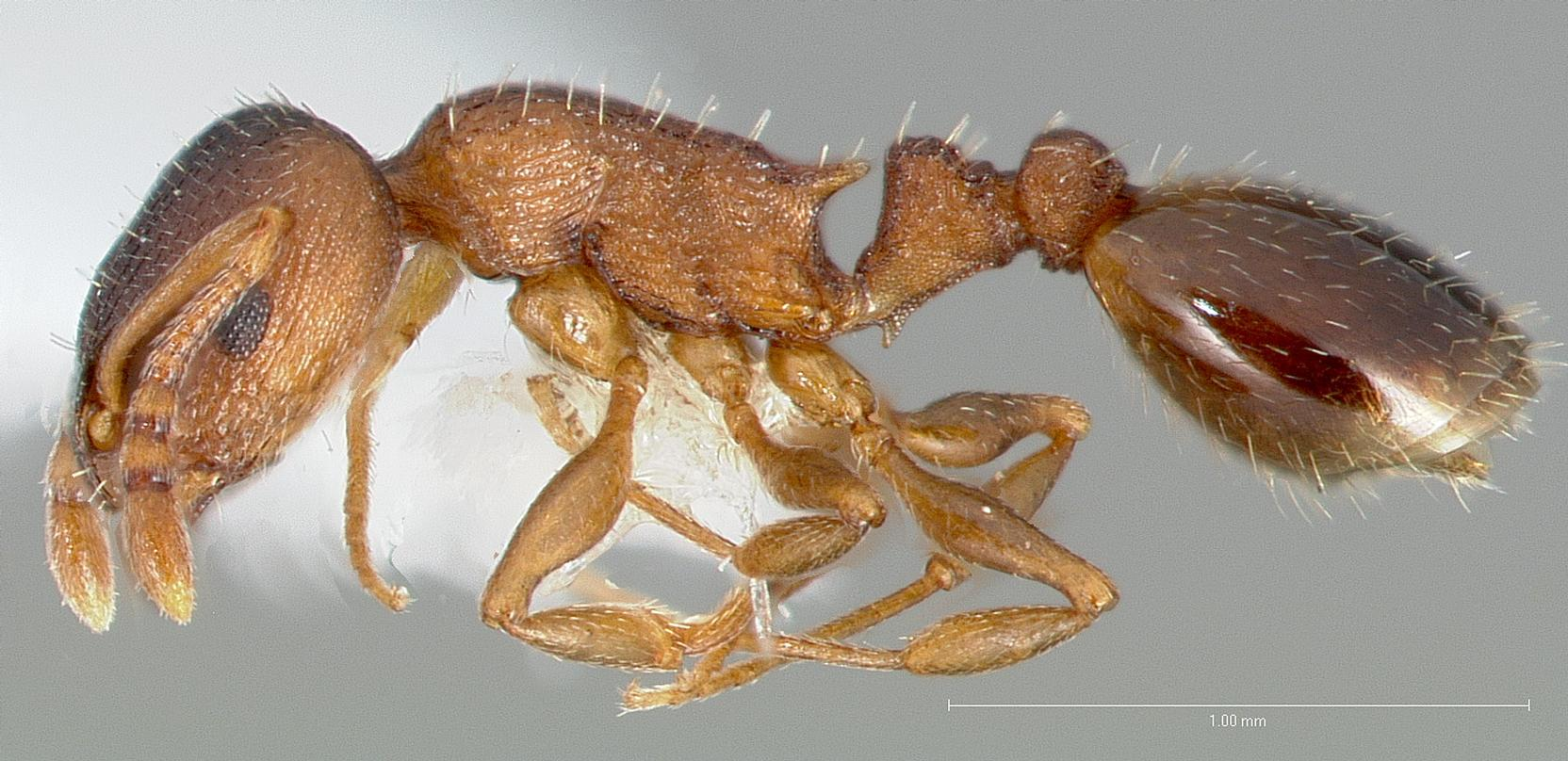 Зачем нужны муравьи-лентяи
