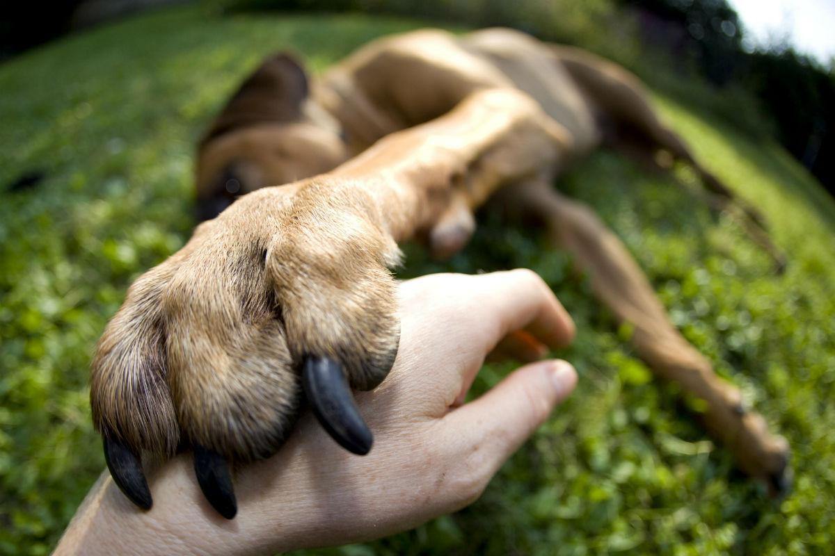 собаки ощущают запах человеческого страха