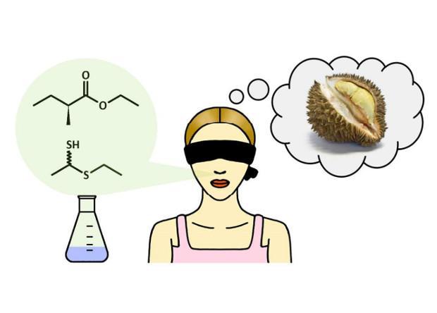 химики раскрыли секрет отвратительного запаха дуриана