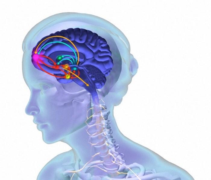 окситоцин действует на центр удовольствия