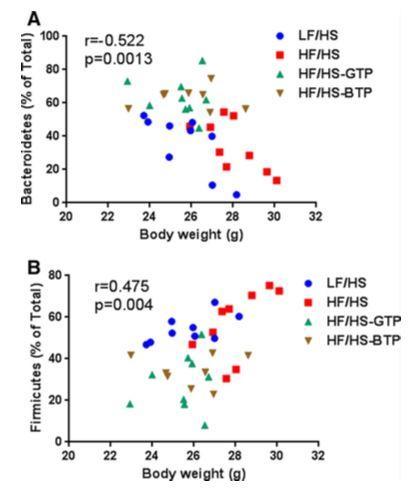 чай улучшил кишечную микробиоту мышей и помог им похудеть