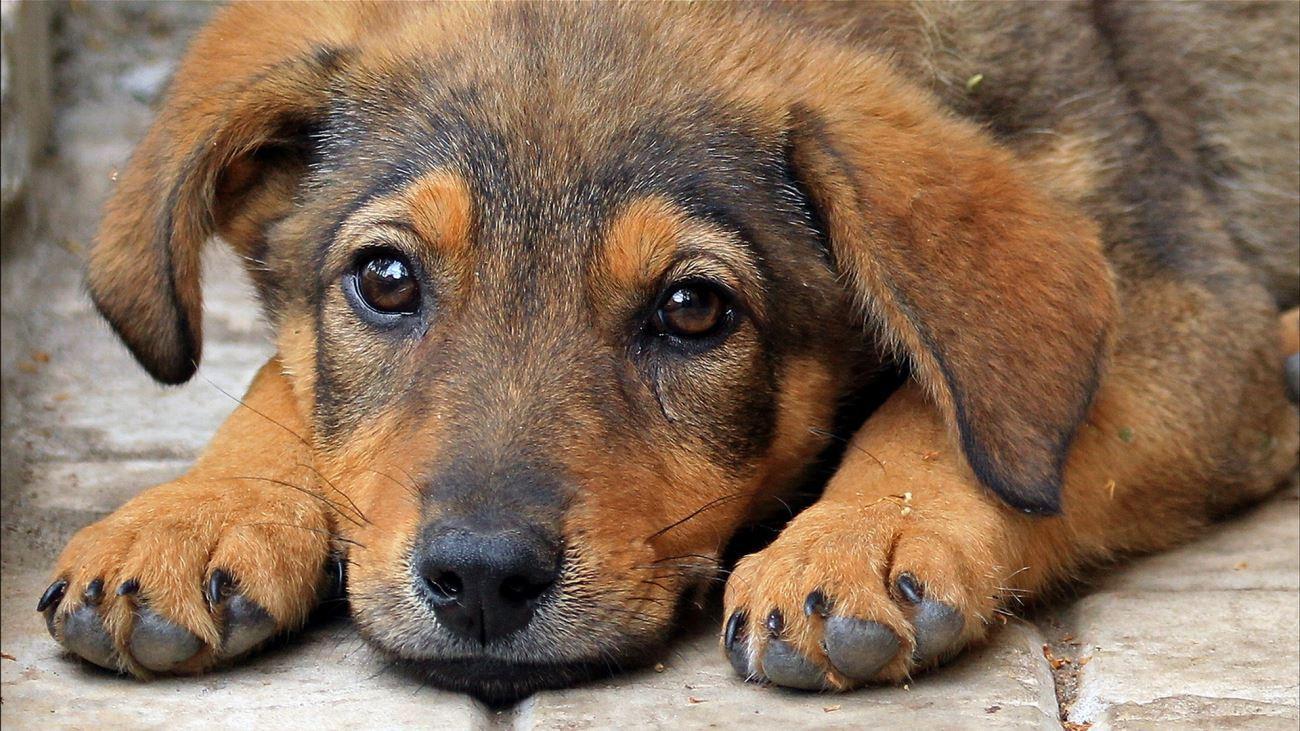 В ОП требуют доводить до суда каждое дело о жестоком обращении с животными