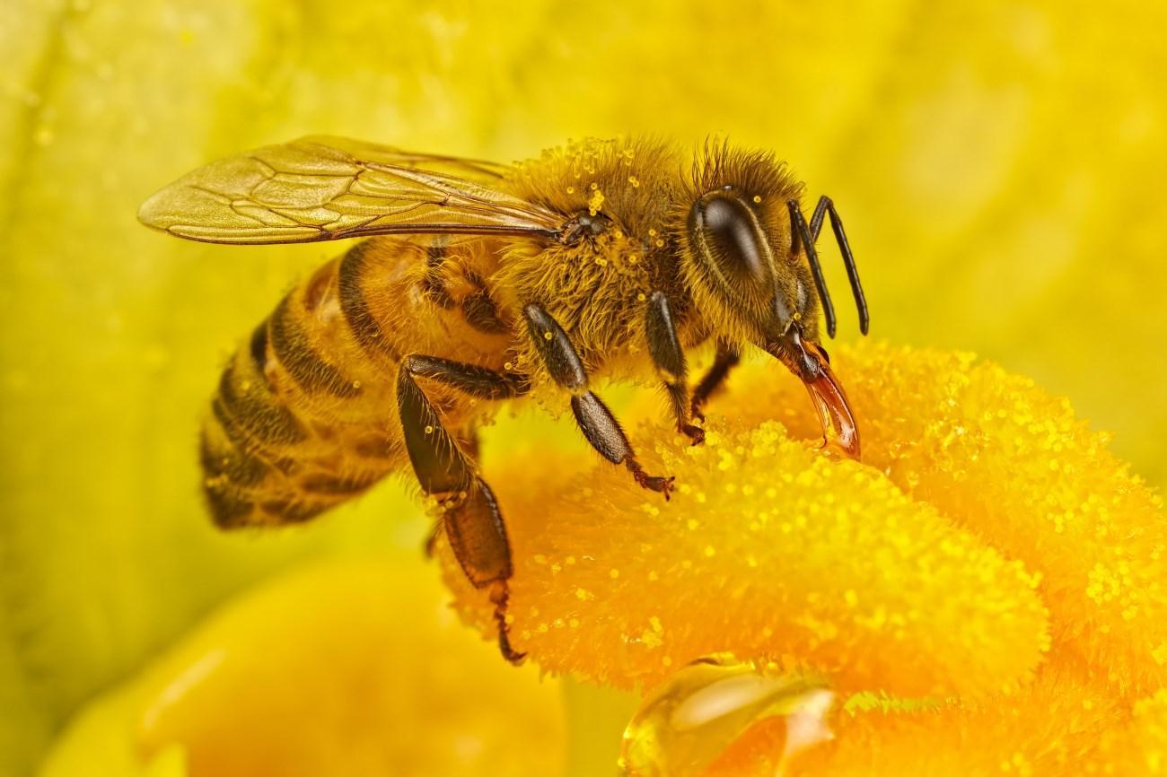 в образцах меда по всему миру обнаружили высокую концентрацию инсектицидов
