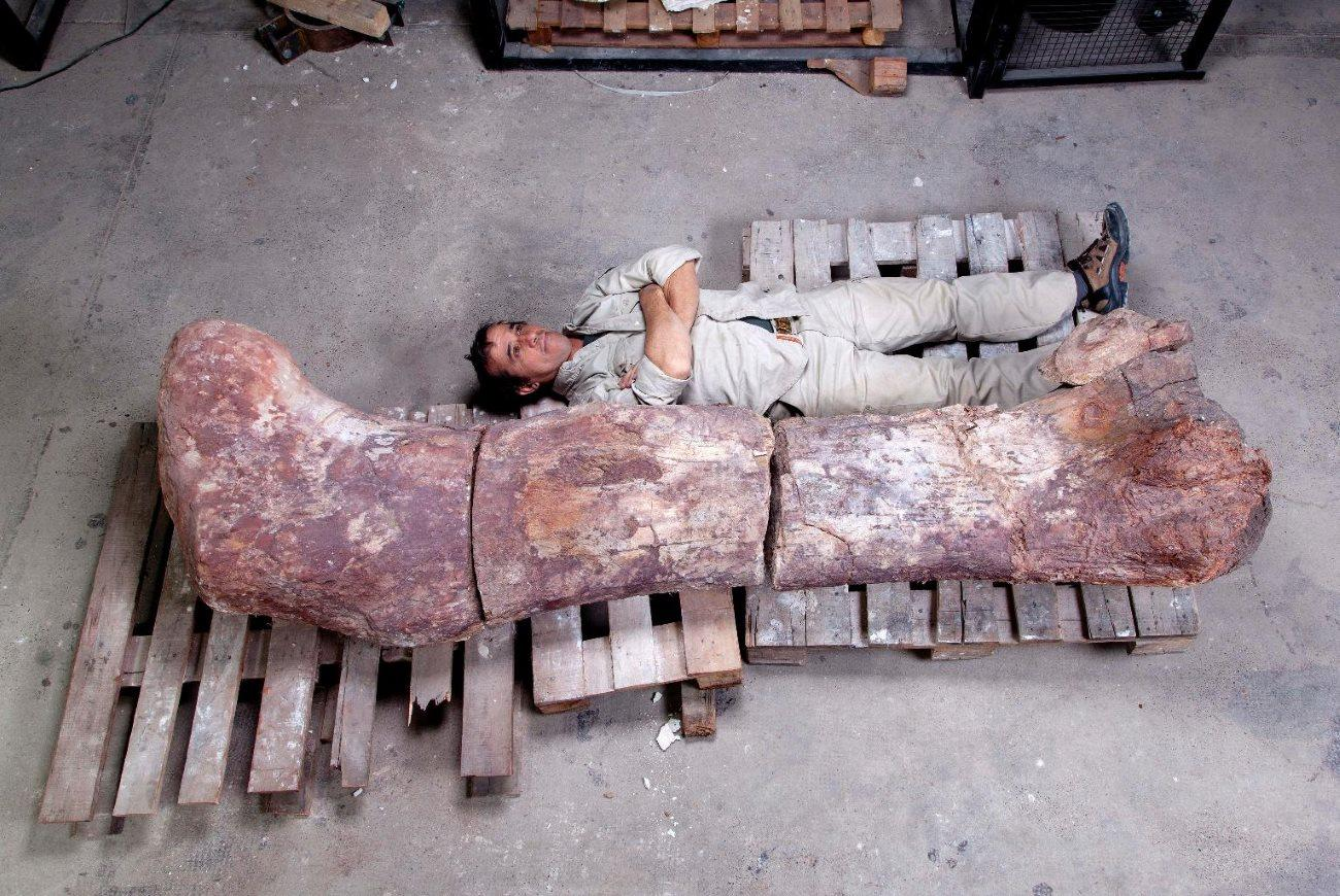 Палеонтологи описали крупнейшего в истории динозавра