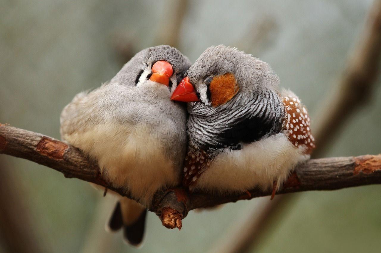 пьяные птицы путаются в песнях