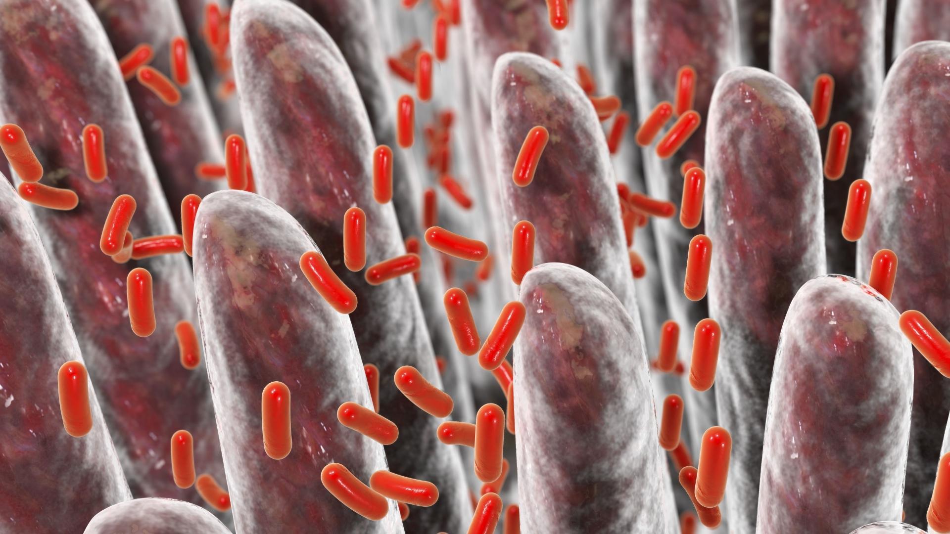 Кишечные бактерии управляют нашими эмоциями?