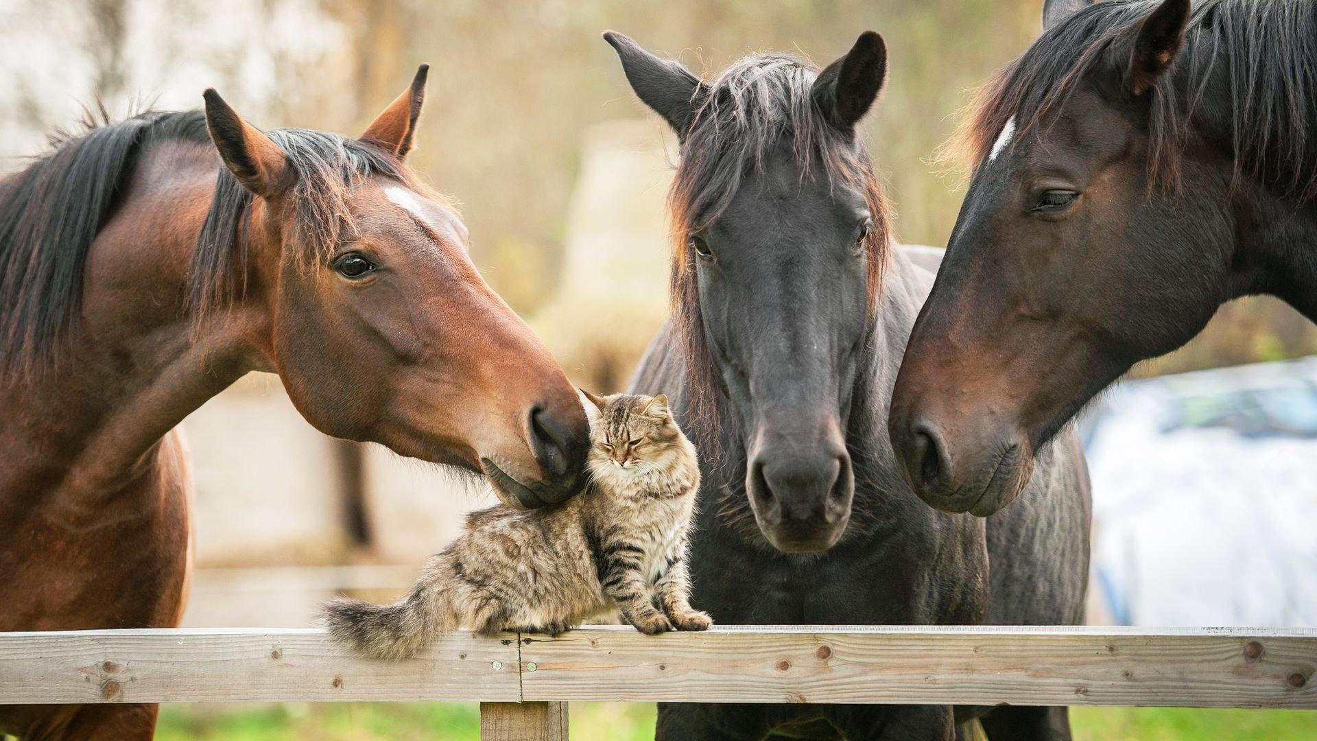 Лошади общаются друг с другом движениями ушей