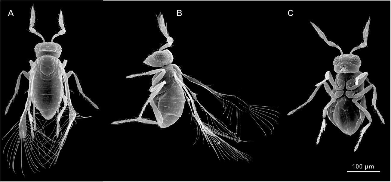 насекомое, у которого растворяются ядра нейронов