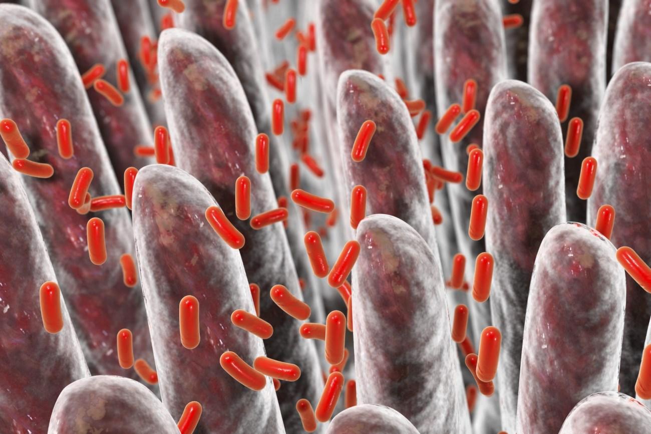 кишечные бактерии управляют нашими эмоциями