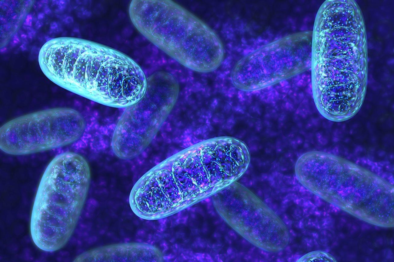 анализ митохондриальной ДНК способен предсказать смерть