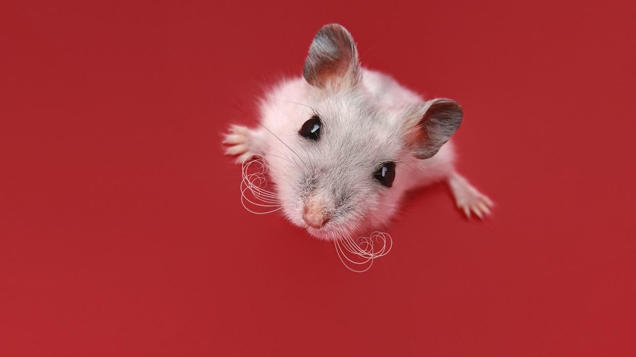 Искусственная медитация снизила тревожность мышей
