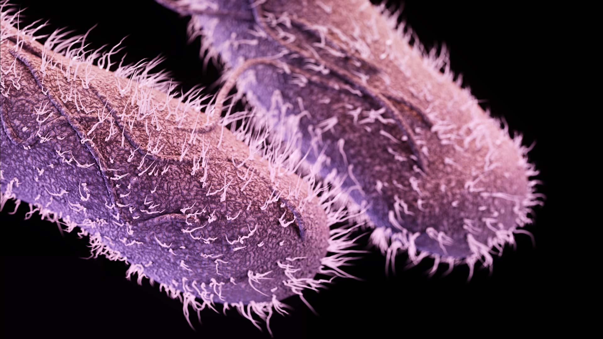 Резистентных бактерий победили старыми антибиотиками с помощью света