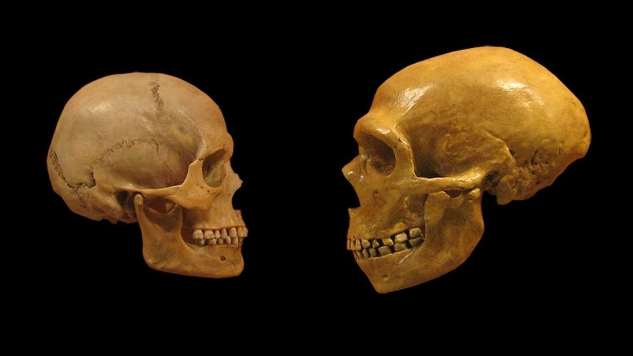 «Неандертальские» зубы появились задолго до неандертальцев