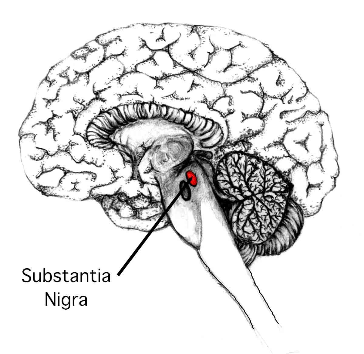 французы обнаружили отвечающие за отвращение к сыру участки мозга