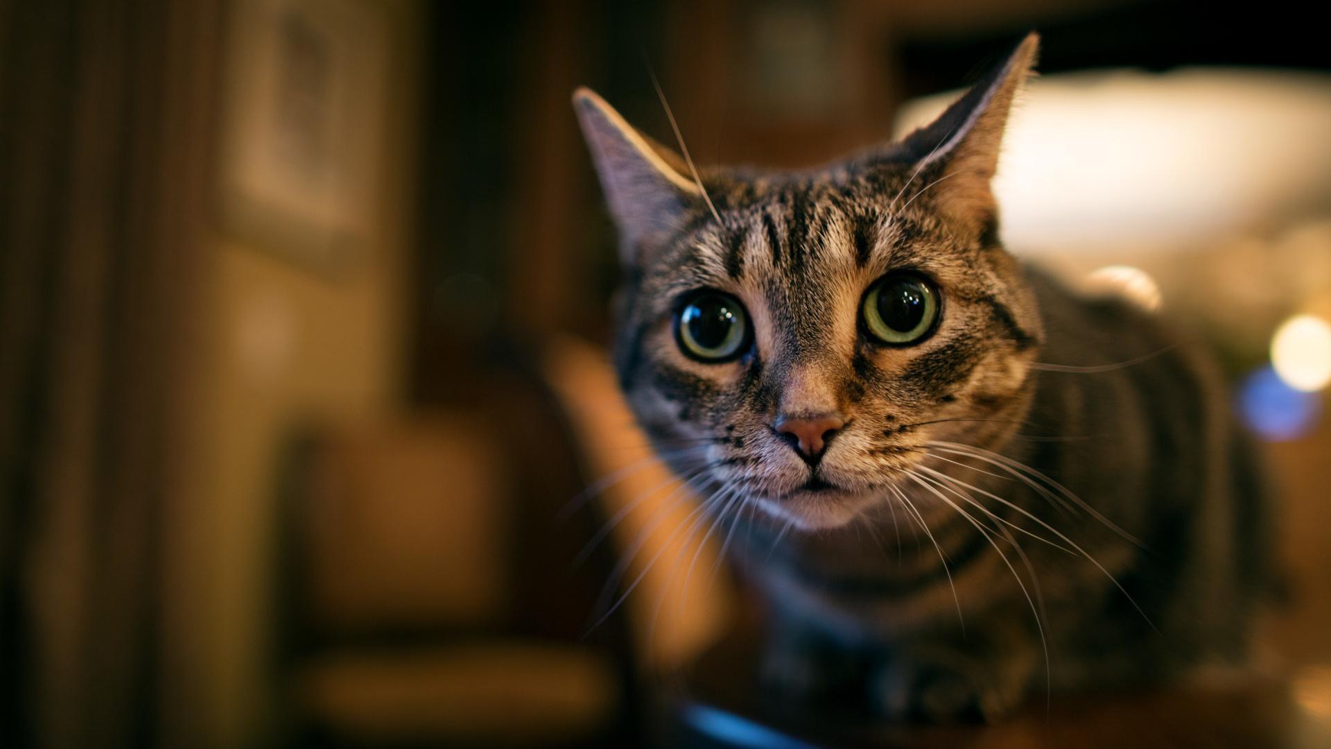 Платная регистрация питомцев вместо закона о защите животных