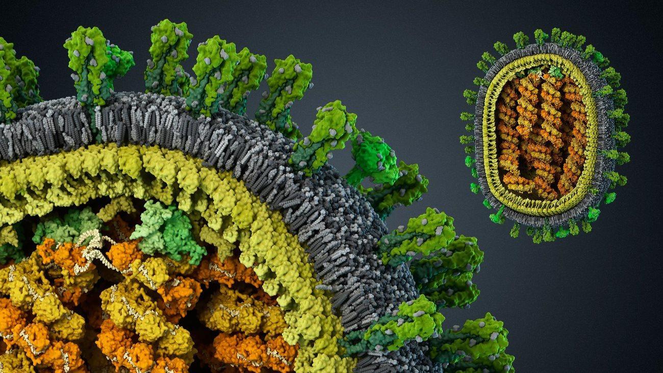 считать ли вирусы живыми