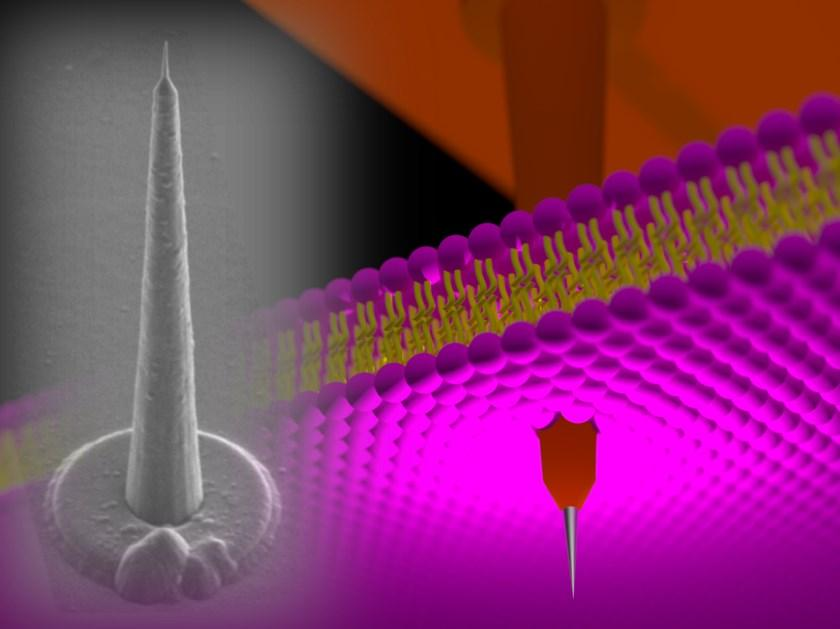 длинные наноиглы позволят углубиться в живой мозг