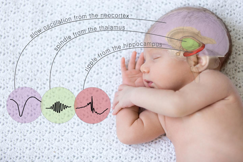 Учёные научились манипулировать памятью во сне