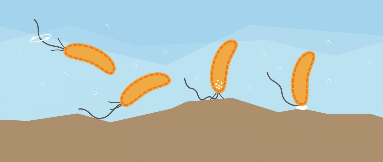 Как бактерии чувствуют прикосновения