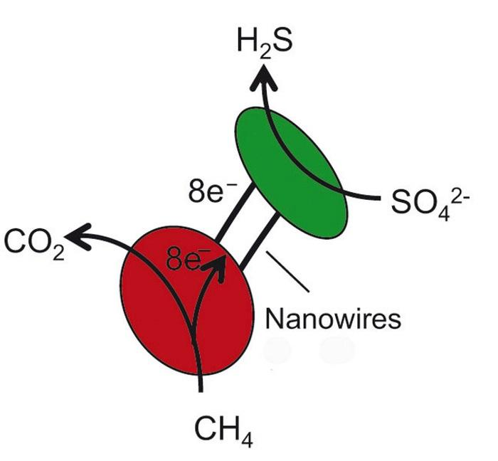 бактериальное электричество заменило микроорганизмам кислород