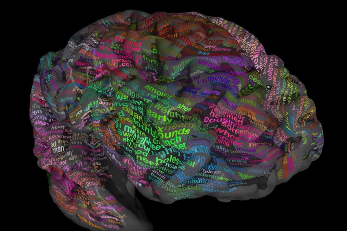 атлас слов головного мозга