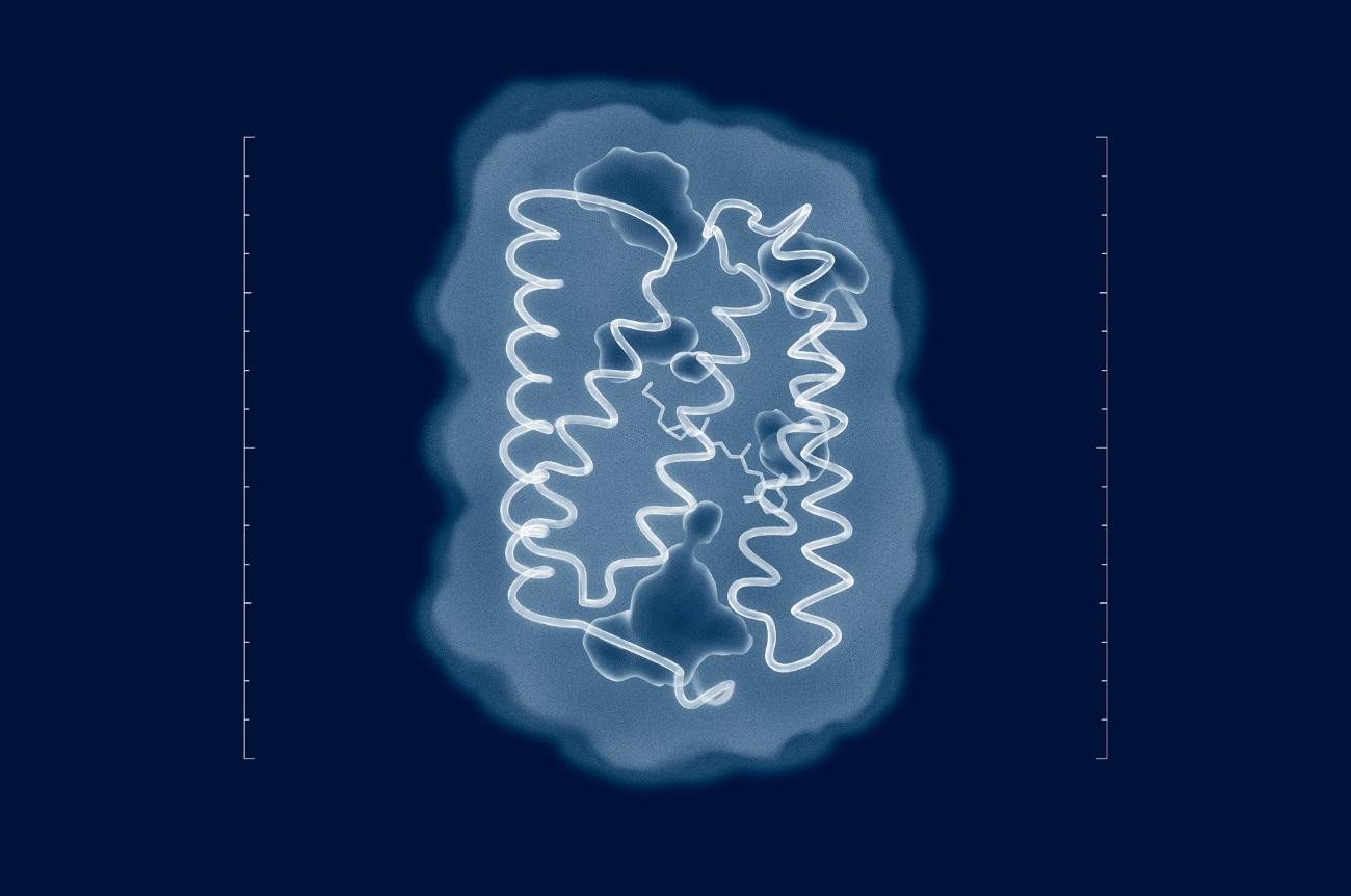 Расшифрована структура белка для оптогенетики