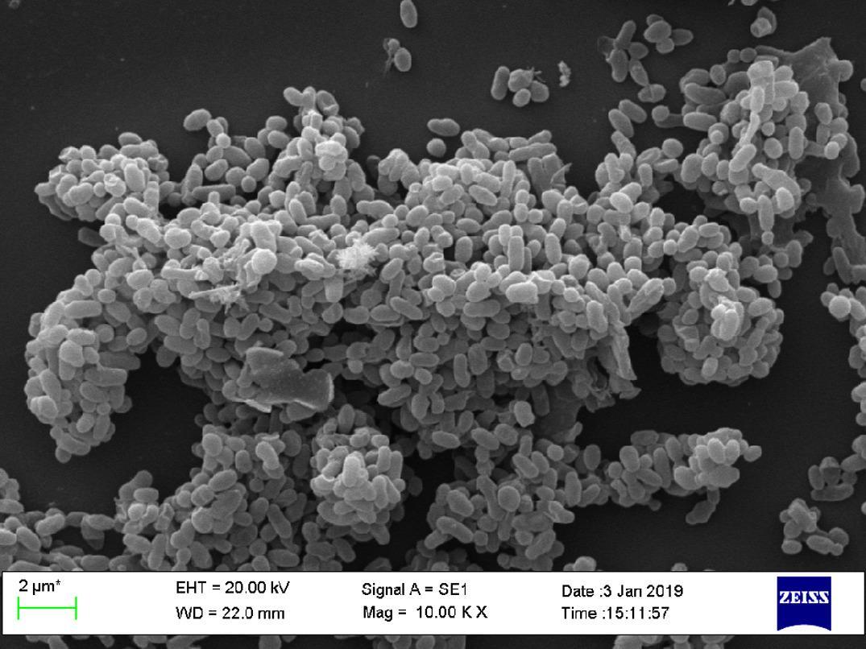 Кишечные бактерии помогают иммунитету бороться с раком