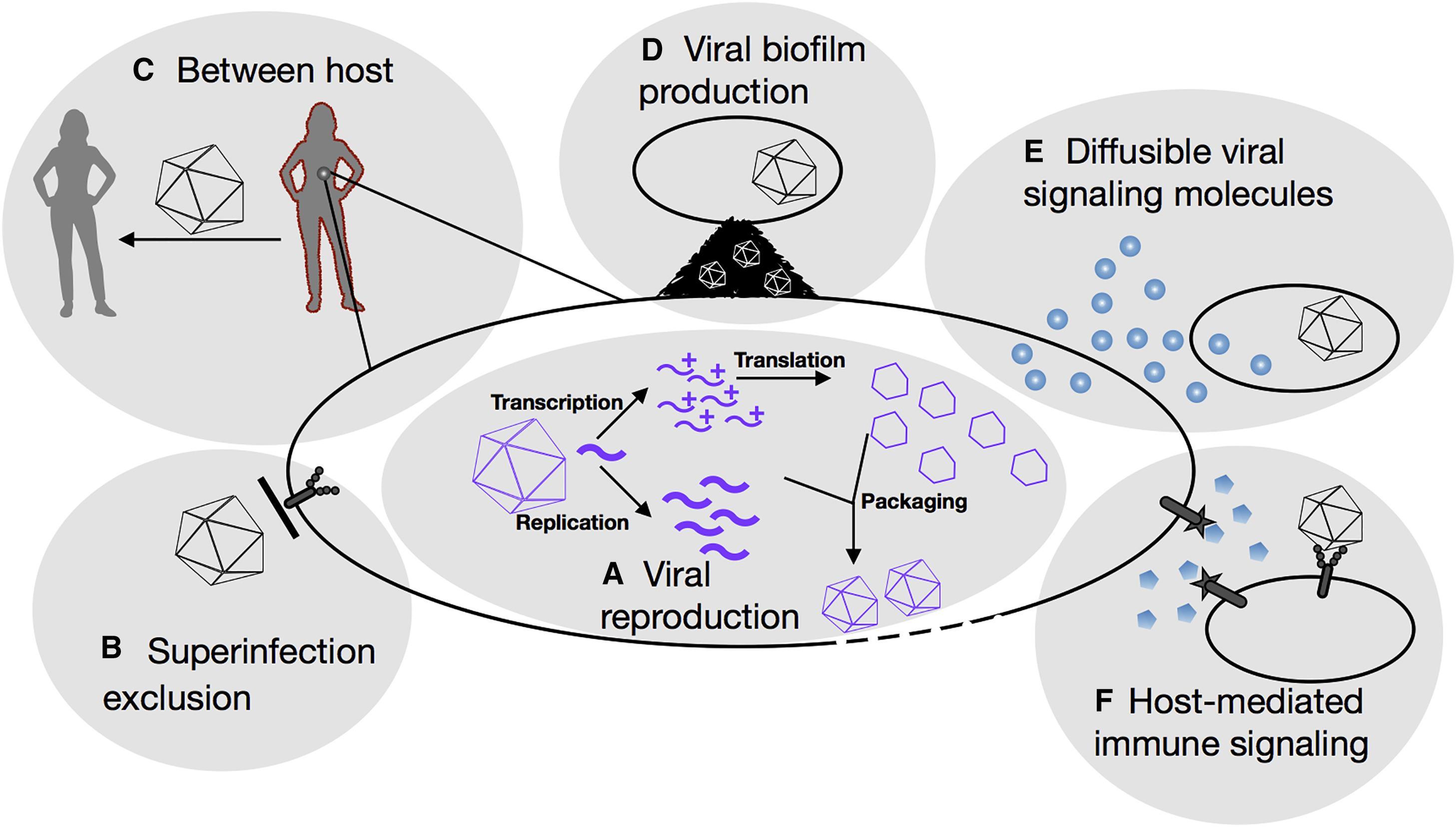 В борьбе с вирусами поможет социовирусология