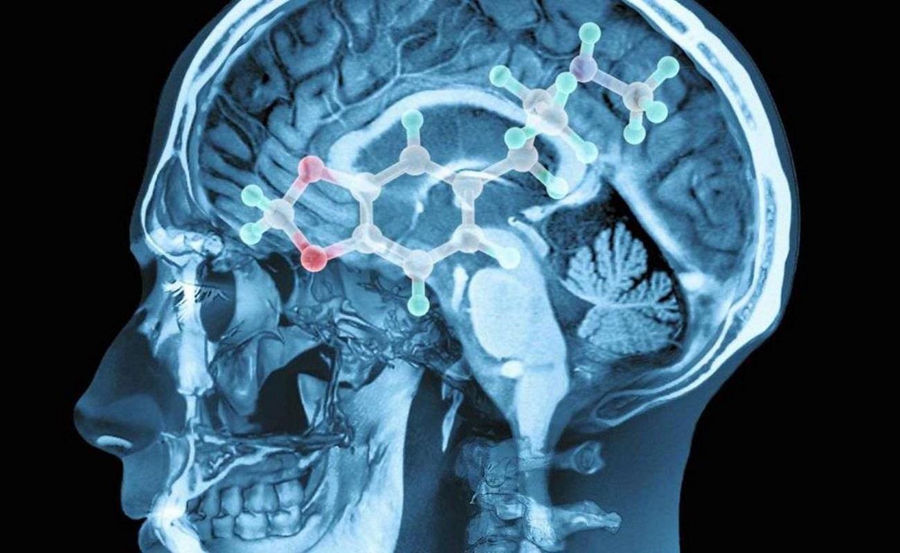 Зачем нейробиологам изучать экстази?