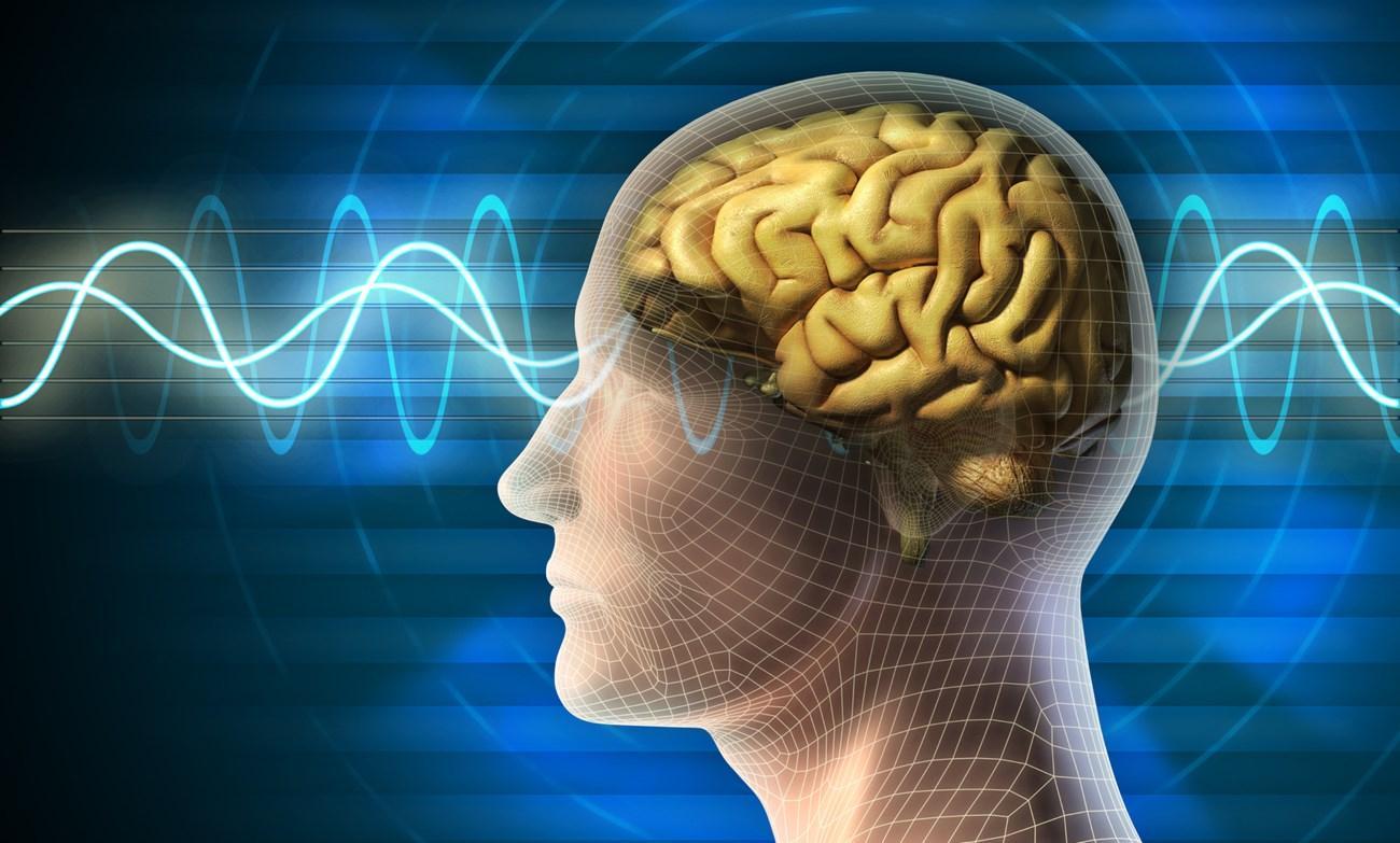 стимуляция мозга ультразвуком может повысить сенсорное восприятие