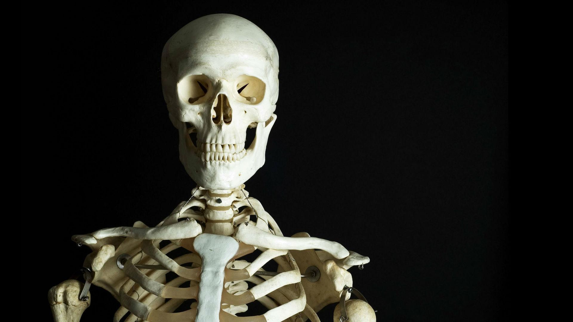 Канадские исследователи разобрались в тонкостях работы гормона костной ткани остеокальцина