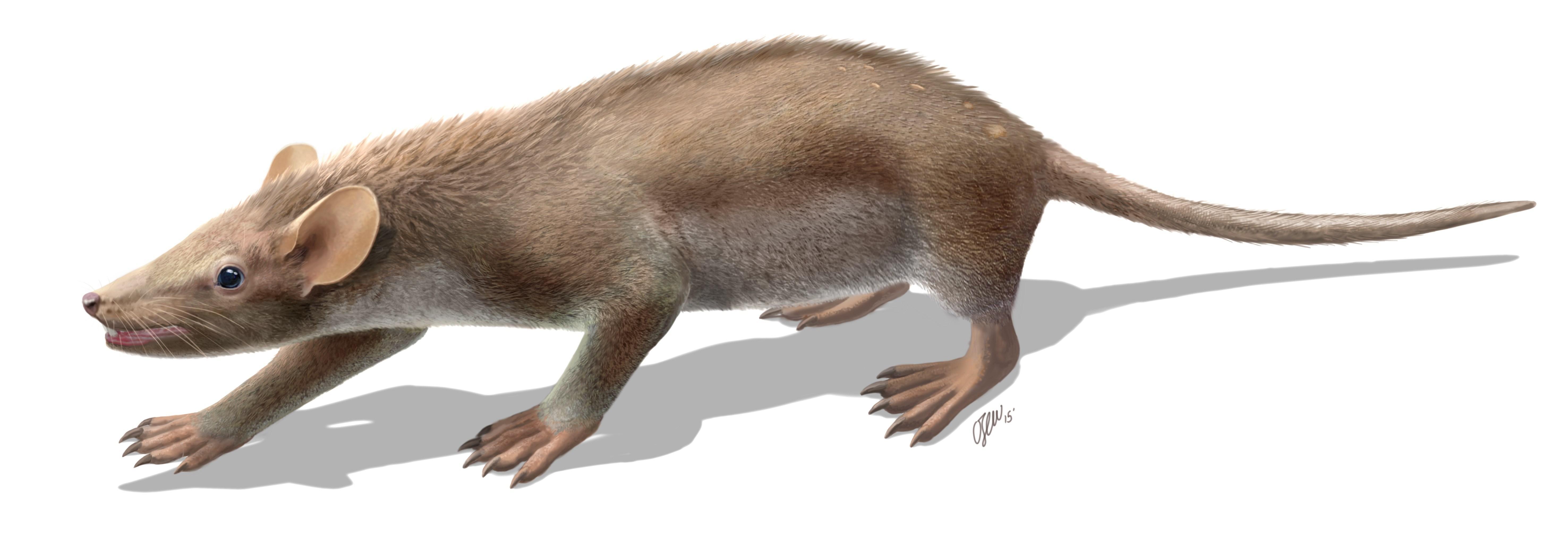 Млекопитающие едва не вымерли вместе с динозаврами
