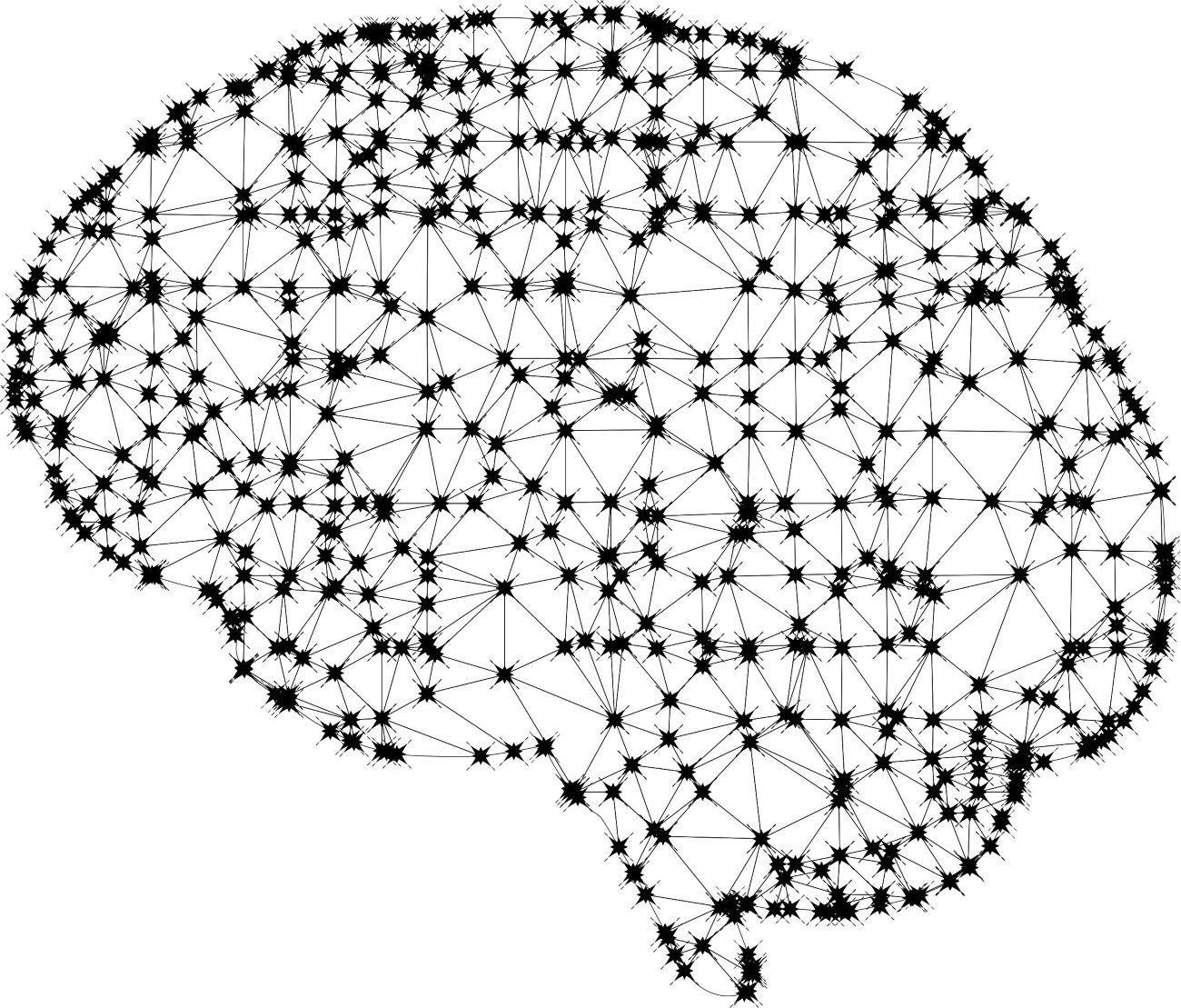 у умных людей иначе взаимодействуют области мозга