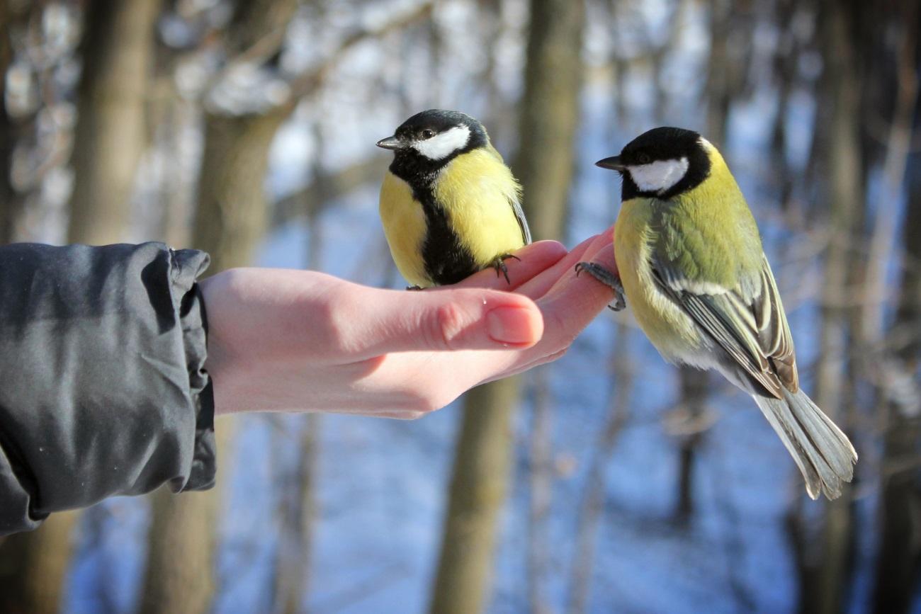 о плохой еде птицы узнают друг от друга