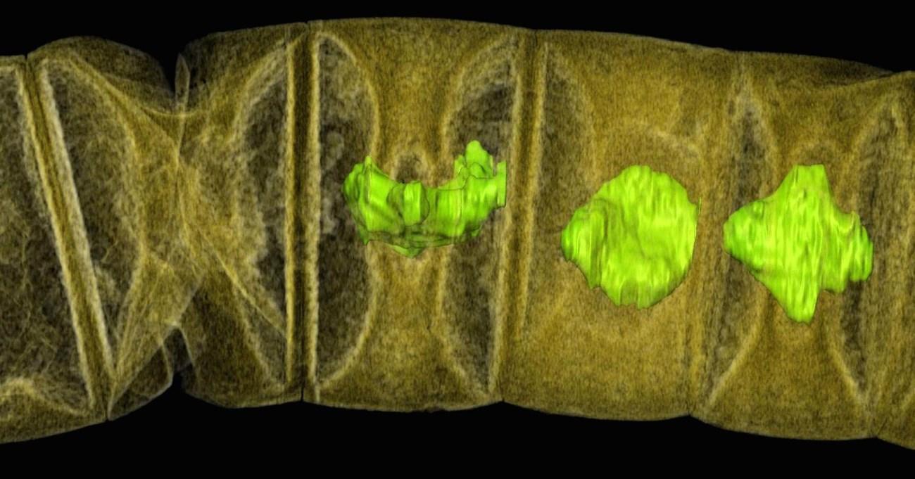 Останки древнейшего растения Земли найдены в Индии