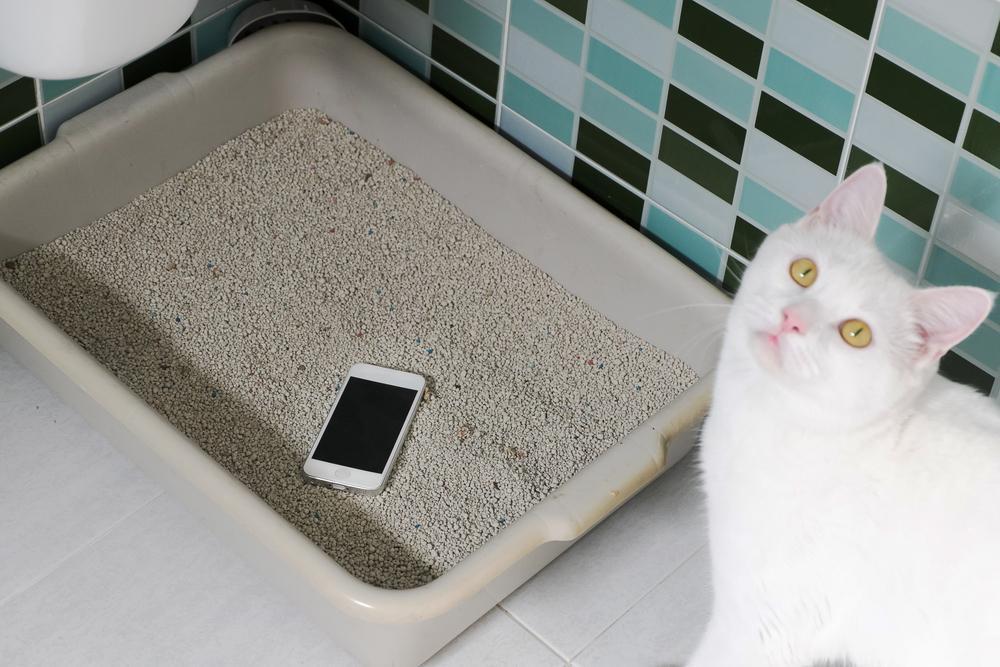 как правильно дезинфицировать ваш телефон