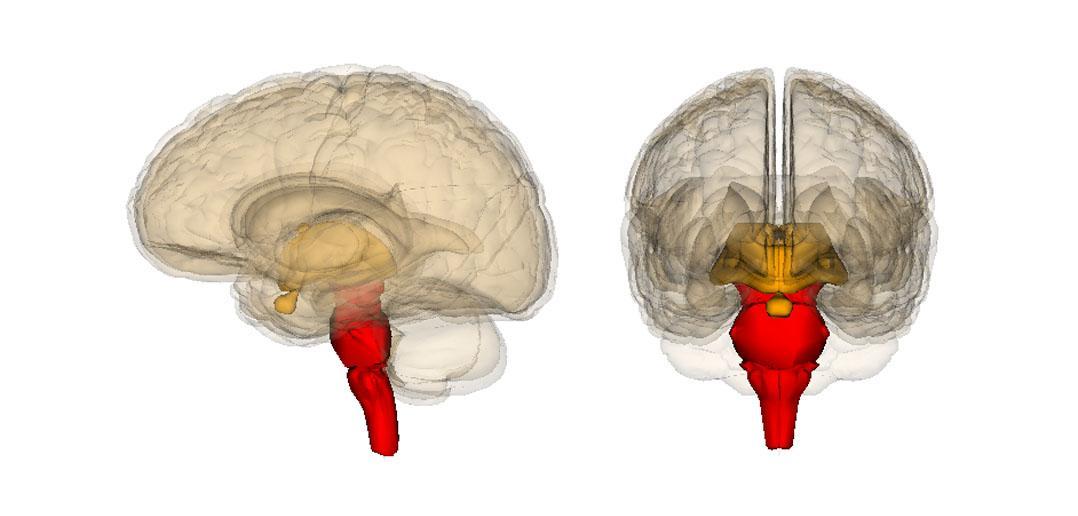 аутизм пытаются лечить через мозжечок