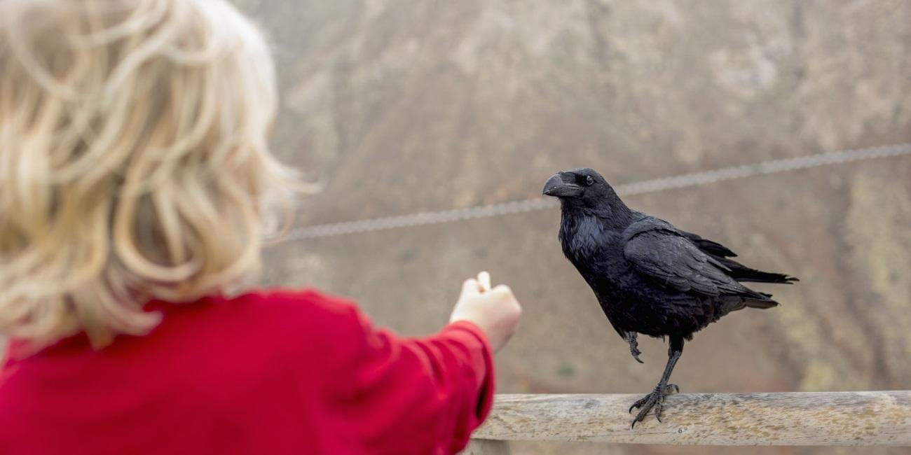 Почему птицы такие умные?