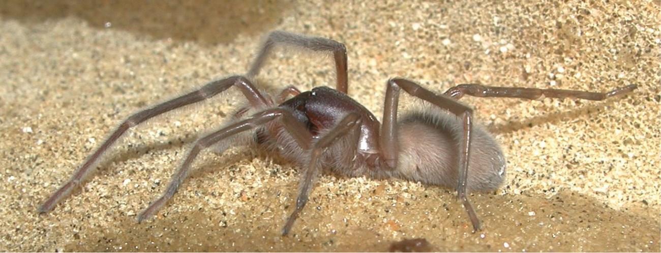 новый вид морских пауков назвали в честь Боба Марли